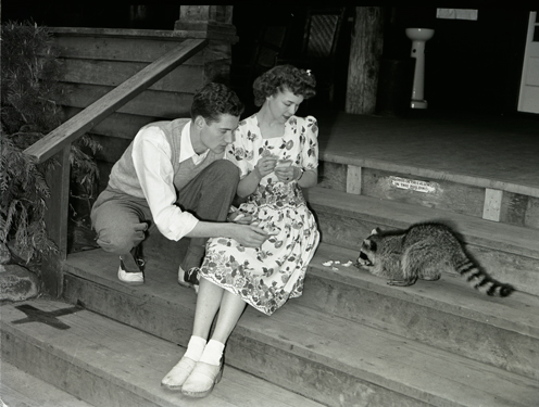 Feeding a raccoon, circa 1940. The Washington State Archives would like to remind you not to feed the raccoons. Progress Commission Photographs, 1937-1945; Washington State Archives, Digital Archives