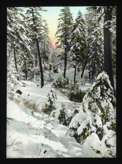 Winter Scene, Spokane